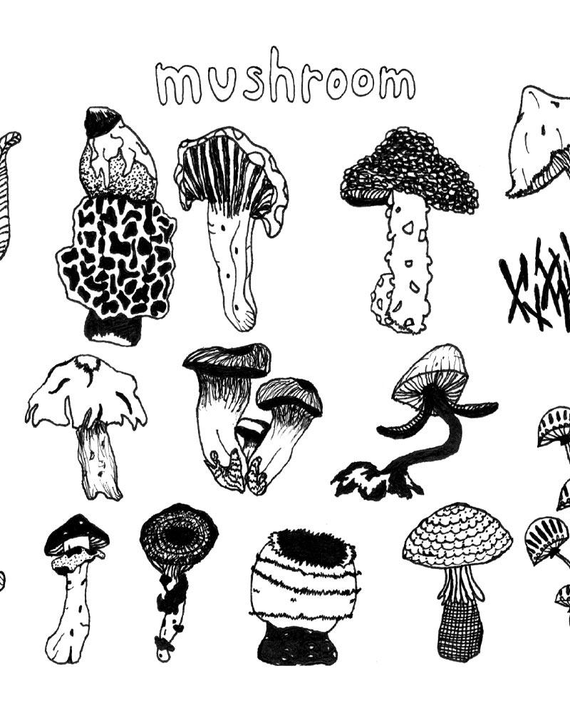 Taylor Barstow - Mushroom