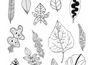 Taylor Barstow art - Leaf