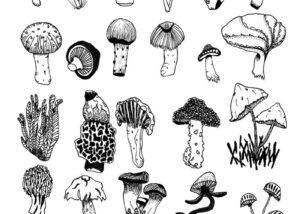 Taylor Barstow art - Mushroom