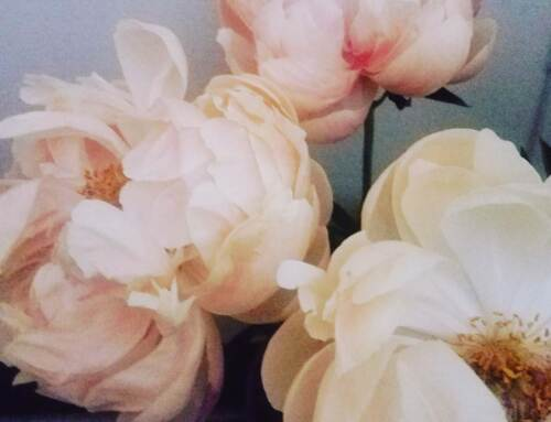 Peonies Day 9