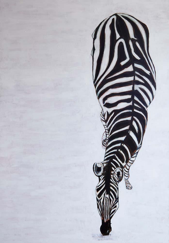Donald Hershman - Male Zebra