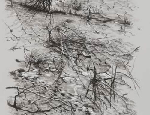 Mud slough, Fremont