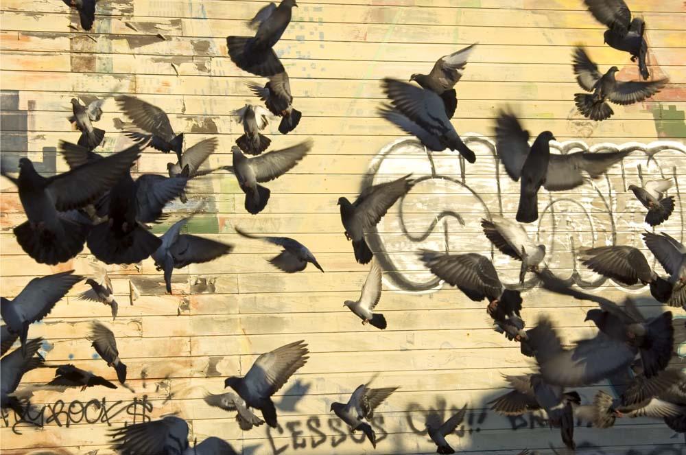 Trish Tunney - The Birds